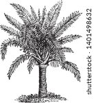a picture of sago palm tree....   Shutterstock .eps vector #1401498632