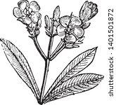 oleander  nerium oleander  is a ...   Shutterstock .eps vector #1401501872