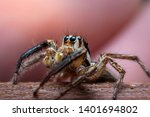 spiders with multiple eyes... | Shutterstock . vector #1401694802