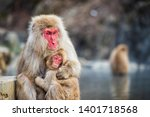 japanese snow monkey macaque... | Shutterstock . vector #1401718568