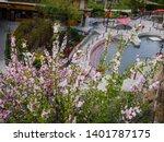 Lava Hot Springs Flowers In...
