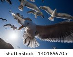 Flock Of Seagulls Flying In A...