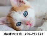 Stock photo pet animal cute kitten cat 1401959615