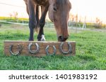 Horse Without Horseshoes On Th...
