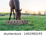 Horse Without Horseshoes In Th...