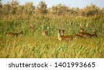 wildlife landscape   herd of... | Shutterstock . vector #1401993665