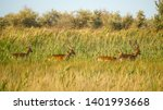 wildlife landscape   herd of... | Shutterstock . vector #1401993668