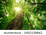 forest trees. nature green wood ... | Shutterstock . vector #1402138862