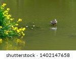 wild bird duck and yellow iris | Shutterstock . vector #1402147658