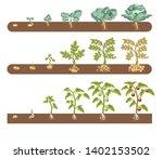 tomato cabbage and potato plant ...   Shutterstock .eps vector #1402153502