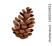 Open Fir Cone. Vector...