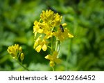 yellow flowers and a small fly... | Shutterstock . vector #1402266452