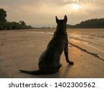 Stock photo silhouette of a dog sitting and looking sunrise in the morning 1402300562