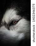 alaskan malamute breed dog... | Shutterstock . vector #1402346375