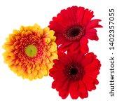 three   orange and red gerbera... | Shutterstock . vector #1402357055