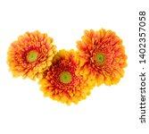 three   orange gerbera flower... | Shutterstock . vector #1402357058
