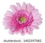 pink gerbera flower head... | Shutterstock . vector #1402357082