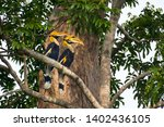 great hornbill male and female... | Shutterstock . vector #1402436105