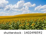 field of sunflowers with blue...   Shutterstock . vector #1402498592