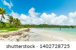 Palm Trees And White Sand In...