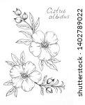 cistus monspeliensis  rockrose  ... | Shutterstock . vector #1402789022