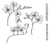 botanical drawing. sketch of... | Shutterstock . vector #1402841015