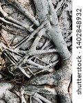 intertwined closeup tree... | Shutterstock . vector #1402848932