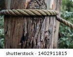 Closeup Of Textured Tree Trunk...
