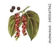 hand drawn black pepper plant.... | Shutterstock .eps vector #1403167562