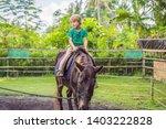 boy horseback riding ... | Shutterstock . vector #1403222828