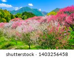 Beautiful peach blossoms and mountains
