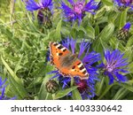 Butterfly On Purple Wild...