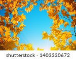 maple branches in autumn forest | Shutterstock . vector #1403330672