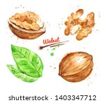 watercolor illustration of... | Shutterstock . vector #1403347712