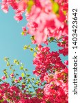 floral background  spring...   Shutterstock . vector #1403423642