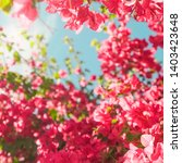 floral background  spring...   Shutterstock . vector #1403423648