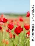 poppy field in summer | Shutterstock . vector #140343262