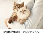 Stock photo woman with cute funny kittens at home 1403449772