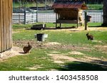 Stock photo a rabbit is sitting on the grass on a farm the hare is running around on a green lawn in a nice 1403458508
