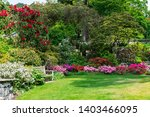 Beautiful Garden With Blooming...