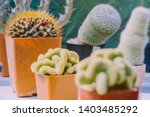 variety of small cactus and...   Shutterstock . vector #1403485292