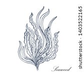 Seaweed. Vector Illustration...