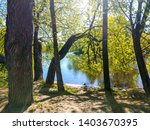 spring forest river trees view. ... | Shutterstock . vector #1403670395