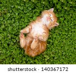 Stock photo tiny red kitten outdoors portrait 140367172
