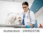 dog eating. white dog standing... | Shutterstock . vector #1404023738