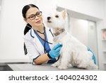 Stock photo vet feeling good beaming dark eyed veterinarian wearing uniform feeling good while examining dog 1404024302