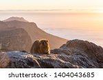 Landscape Photo Of A Rock Hyrax ...