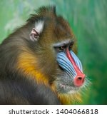Portrait of mandrill ...