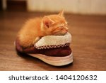 Stock photo little red kitten lies in a brown sneaker and sleeps with his eyes shut kitten in the house 1404120632
