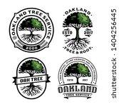 Set Oak Tree And Root Logo...
